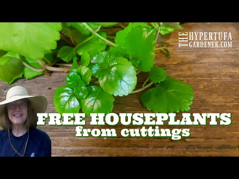 Free Houseplants From Cuttings - Rooting Cuttings for Outside in Spring - It's All Free! Propagate!