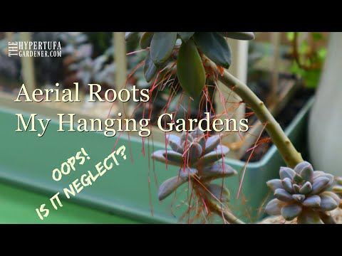 Aerial Roots Up Close - Do They Hurt My Plant?