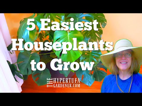 5 Easiest Houseplants to Grow - Just My Experience