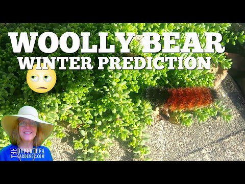 🤔🤷 Officially Predicting Winter Weather 2019-2020 With My Buddy Woolly Bear 😳😏 Just for Fun!