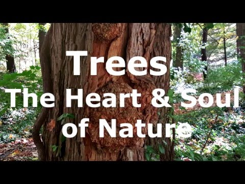 Trees - The Heart & Soul of Nature