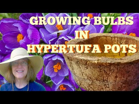 Growing Bulbs in Hypertufa Pots - Can't Wait for Spring To See!