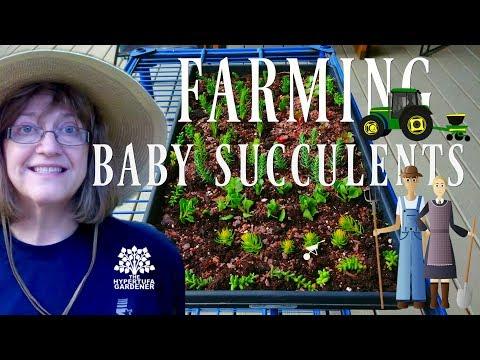 Farming Baby Succulents- Check out My Little Farm Plot!
