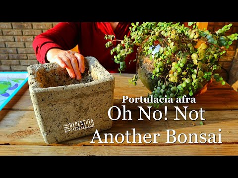Planting Portulacaria Afra in Hypertufa - Pruning It Into A Bonsai (Amateur Style)