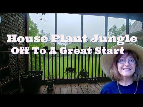 Mini-Jungle of House Plants - Plant Tour On My Porch