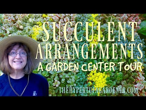 Succulent Arrangements - A Garden Tour at a Nursery!
