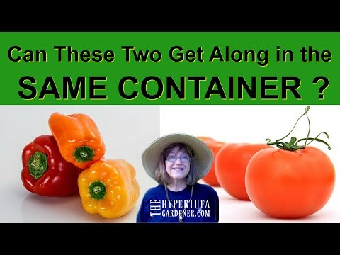 Companion Planting - Will It Work for Tomatoes and Peppers?