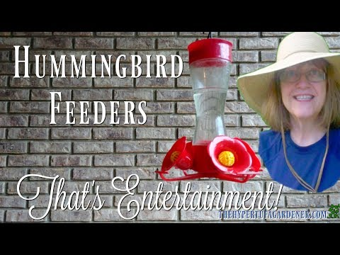 Hummingbird Feeders - For the Yard, not My Window!