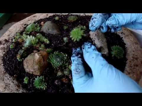 Planting A Hypertufa Bowl | The Hypertufa Gardener
