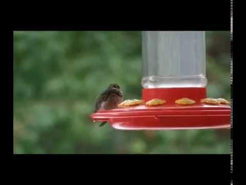 Hummingbird | The Hypertufa Gardener