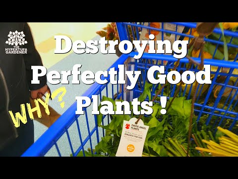 Plant Shopping Trip Turns Into Plant Rant! Why Let These Plants Die?