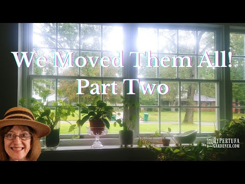 Finding A Way to Get All My Plants...And The Rest of the Furniture to The New House. Part Two