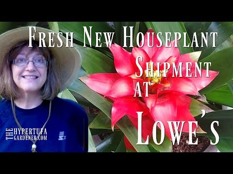 Shopping At Lowe's Plant Store - New Shipment! Fresh Plants! Happy Me!