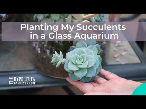 Succulents in Glass Aquarium Terrarium - I Planted With All New Plants From Older Glass Terrariums