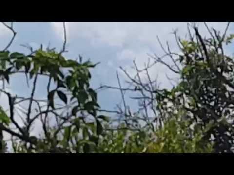 Arachnophobia Much? Filmed spiders in Florida