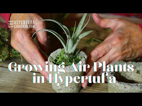 Air Plants Care & Displaying Air Plants - Hypertufa Makes Great Air Plant Holder