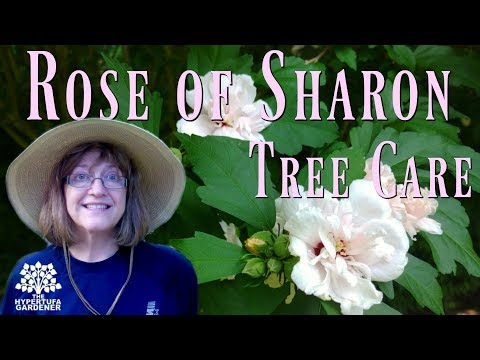 Rose of Sharon - I Have A Living Fence!