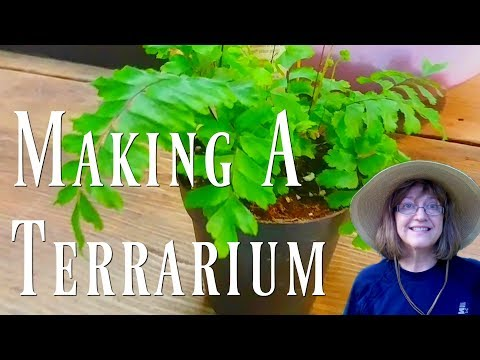 Making Terrariums - A Do-It-Yourself Indoor Garden Planting