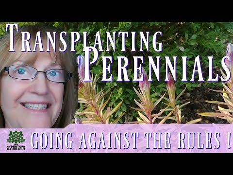 I Broke The Rules! It Worked! Transplanting Perennials