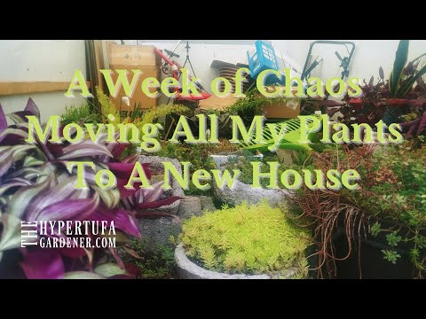 How To Move Plants To A New House - Part One of A Week Of Chaos