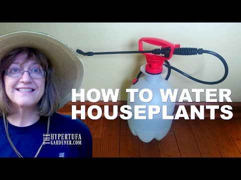 How To Water HousePlants - And A Great Way to Get Water!