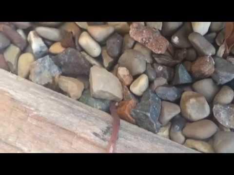 Earthworm Crossing