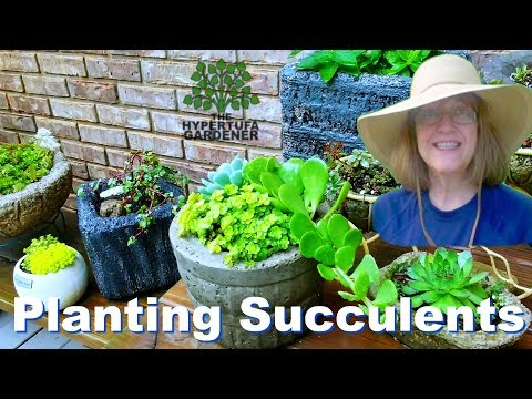 Planting Succulents in Pots - Grown Up Mommy & Me Day!