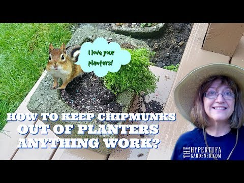 How To Keep Chipmunks Out of Planters - It Works!