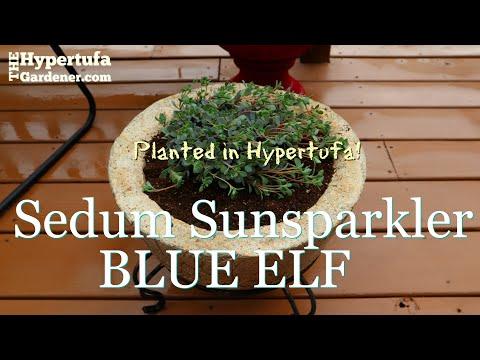 Extra Large Hypertufa Bowl - This Planter for My Sedum Sunsparkler Blue Elf - Made 4 Each Other!