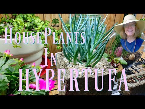HOUSEPLANTS IN HYPERTUFA - My Two Obsessions Combined!