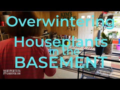 Basement Plant Set Up - Overwintering Houseplants in Basement - Grow Lights for Houseplants