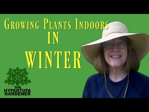 Growing Plants Indoors For Winter - Why Do I Take In So Many?