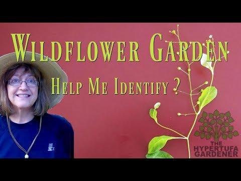 My Wildflower Garden - Help ID These Plants