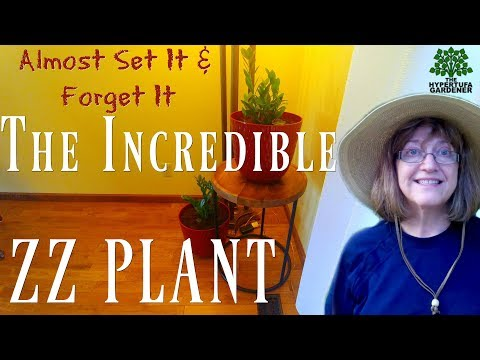 ZZ Plants - It's Incredible! A Set-It and Forget-It plant...Almost!