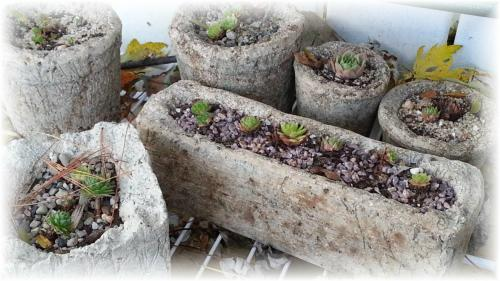 So Many New Tufa Pots Made This Summer!