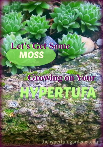 How to Grow Moss - Moss Growing on Hypertufa