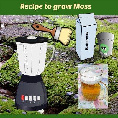 moss with overlay of blender, paintbrush, beer, buttermilk etc
