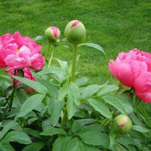 memories-garden2-hypertufa-gardener