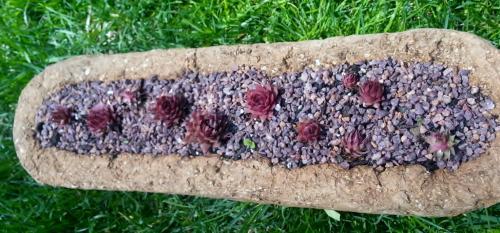 Semps with Creeping Thyme - The Hypertufa Gardener