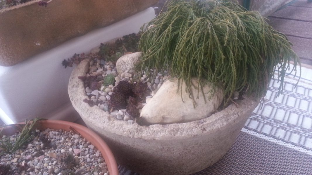 My Big Hypertufa Bowl