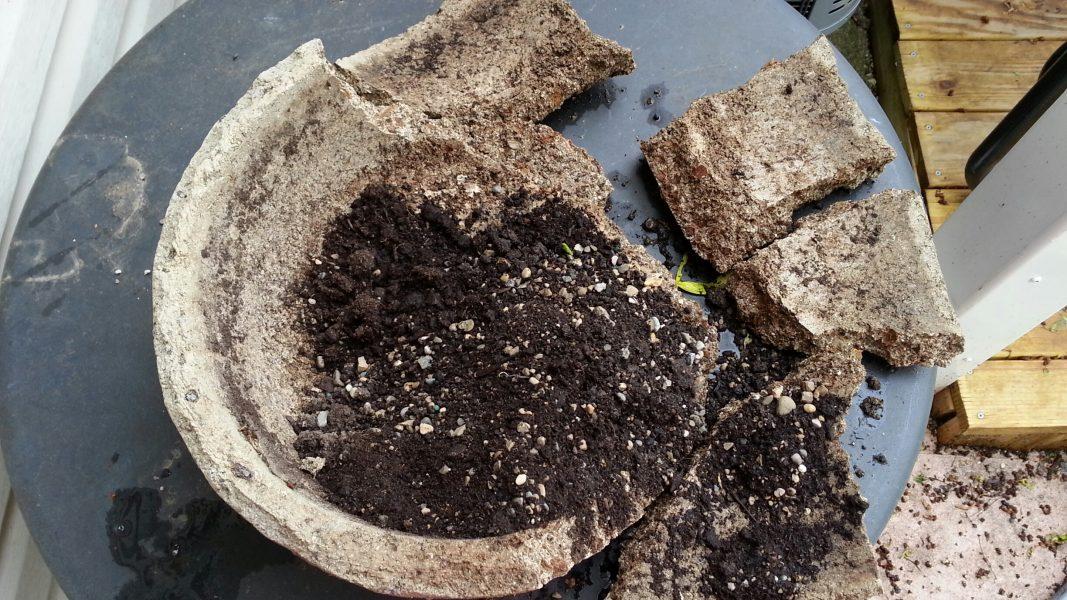 Broken Hypertufa Bowl