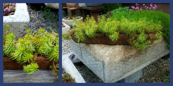 Basket Weave Hypertufa Pot - Morning in the garden