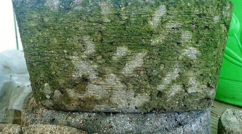 hypertufa shade trough with moss