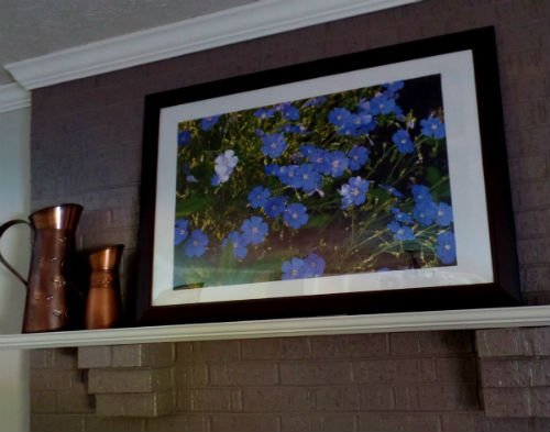 Framed photo of my Blue Flax