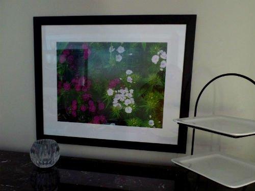 Photos from my garden - Sweet William - dianthus