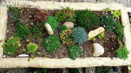 Planted-up-hypertufagardener