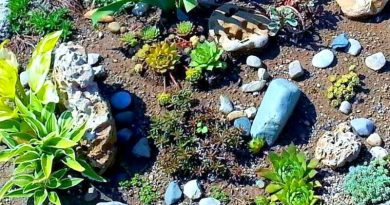 Rock Garden Hypertufa Trough