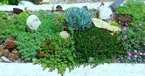grow-bigtrough-hypertufa-gardener