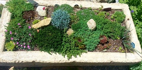 growing-more-hypertufa-gardener