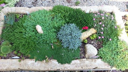 lush-growth-hypertufa-gardener
